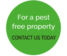 Contact us for pest control services